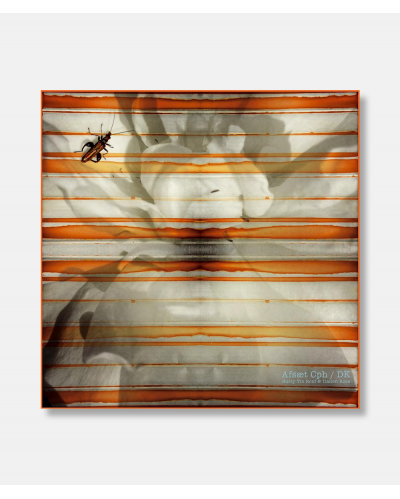 Rusted Tin Roof & Italian Rose - Silk scarf 90 x 90 cm