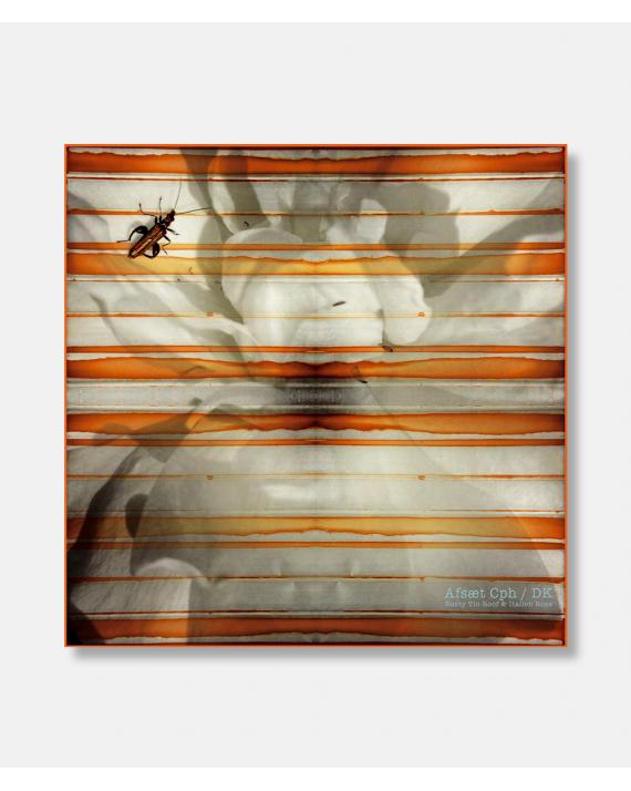 Rusted Tin Roof & Italian Rose - Silk scarf 90 x 90 cm