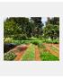 Smuk køkkenhave - inspiration og haveplanter