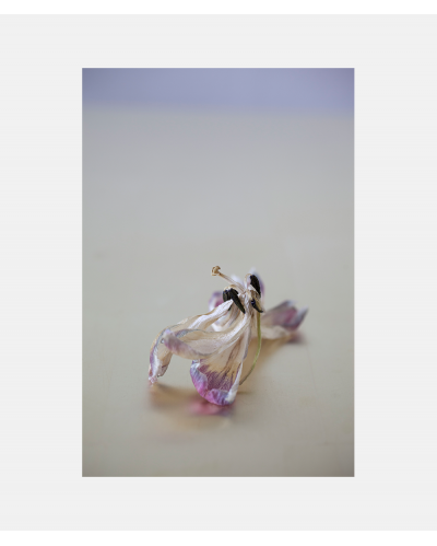 Faded Flowers (gold) 03 Laura Stamer